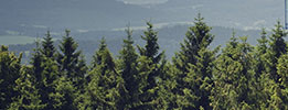 Green treetops to illustrate Forrest Stewardship Council Chain of Custody certification