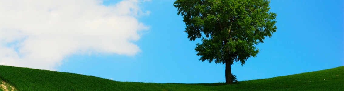 A solitary tree in a field as a banner image for ISO 14001:2004 EMS Foundation and Internal Auditor course.